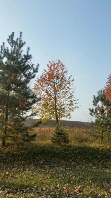 nature-photography-53827-V