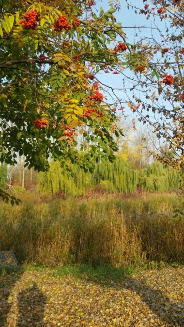 nature-photography-ccf4-V