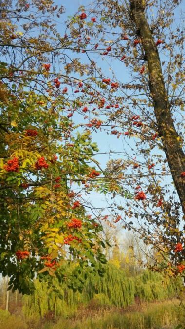 nature-photography-fb4b5-V