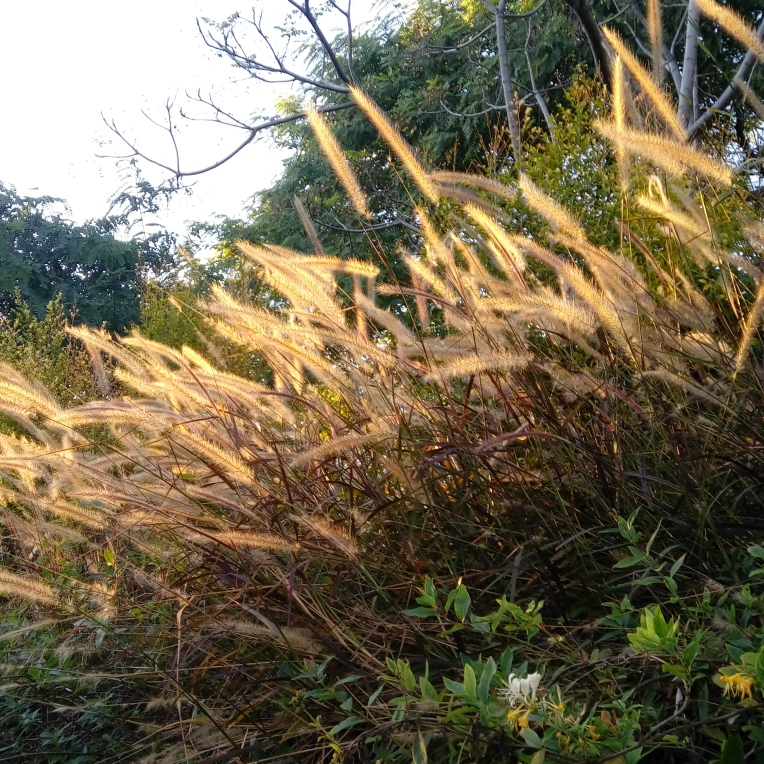 nature-photography-170145