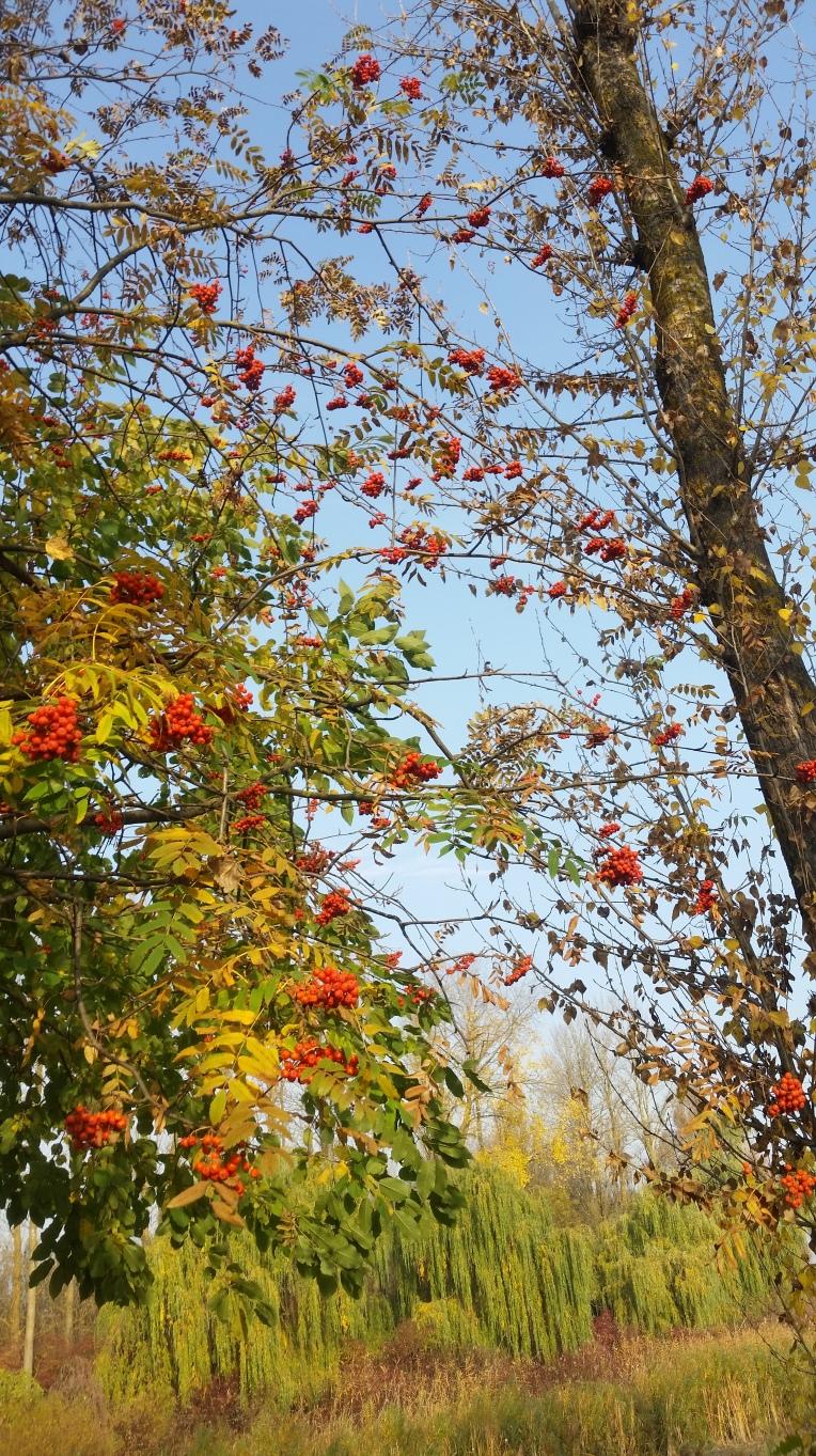 nature-photography-5eccd9b0ae43e0ae1226ab40583a7e14-V