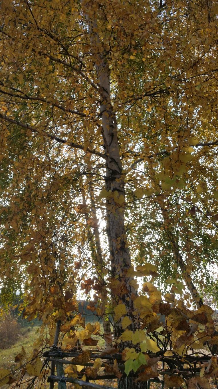 nature-photography-ea3698f31eca136cfbf03fc7793f9482-V