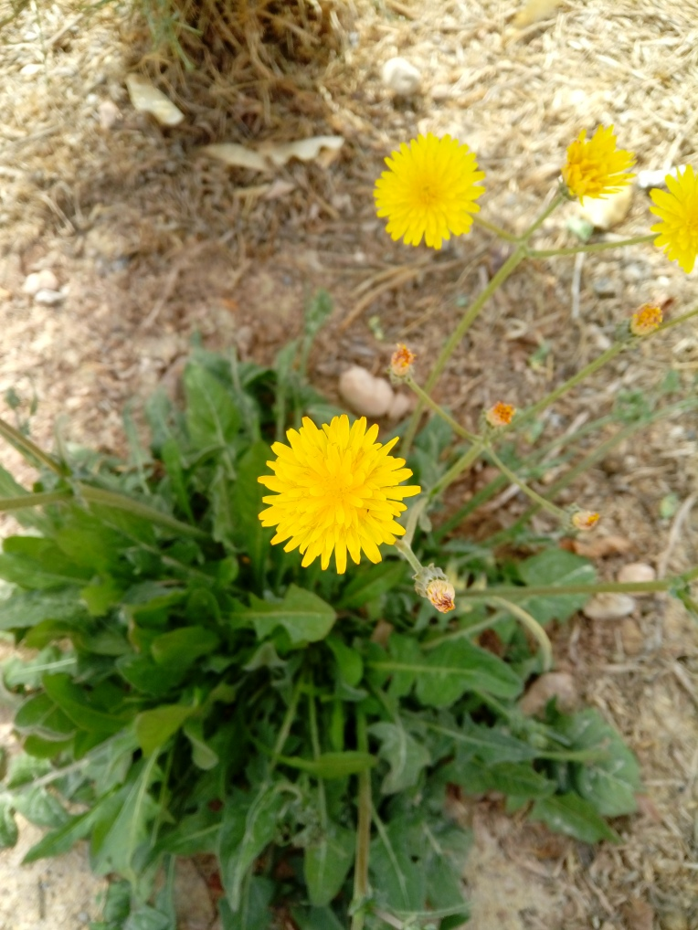 flowers-in-alicante-20190324_114306