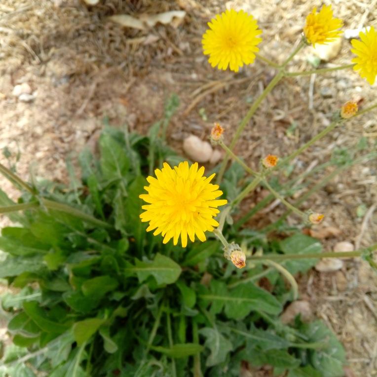 flowers-in-alicante-20190324_114306