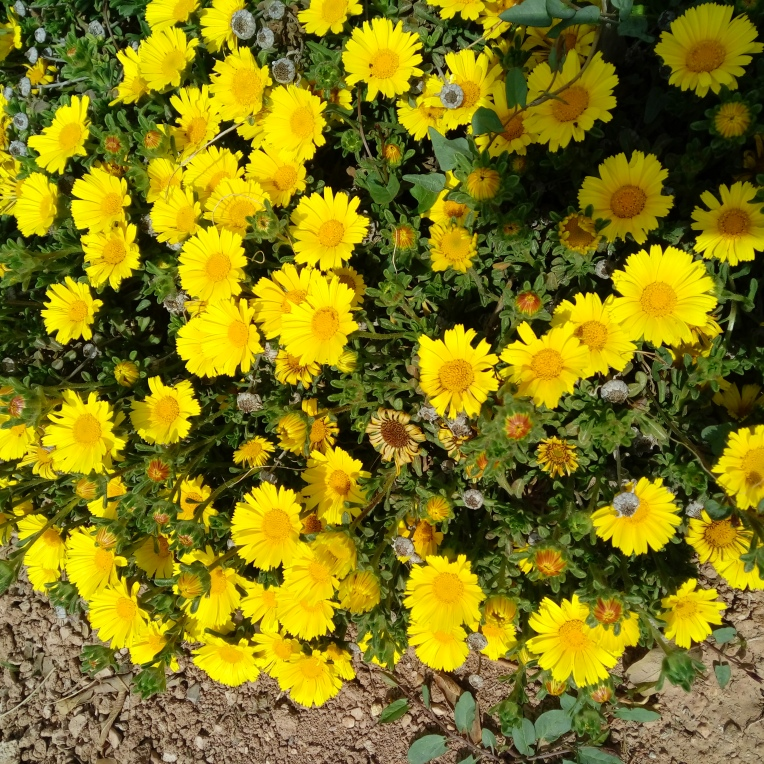 flowers-in-alicante-20190324_114452
