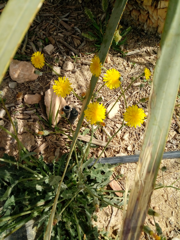 flowers-in-alicante-20190324_114555