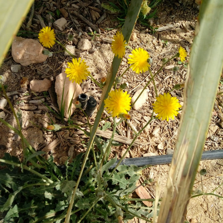 flowers-in-alicante-20190324_114555