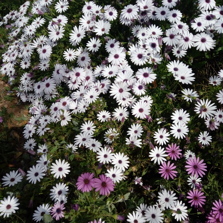flowers-in-alicante-20190324_114653