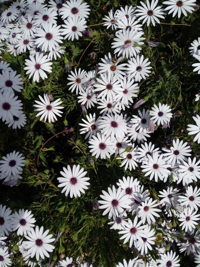 flowers-in-alicante-20190324_114705