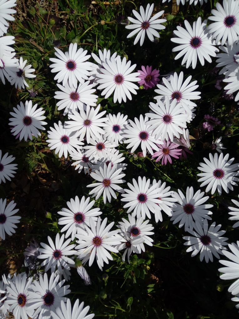 flowers-in-alicante-20190324_114717