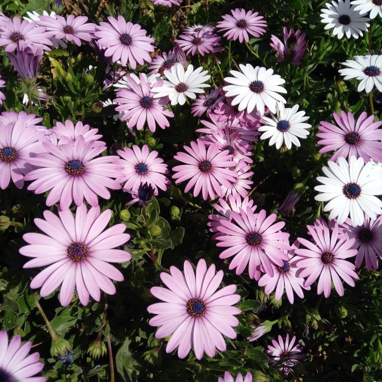 flowers-in-alicante-20190324_114742