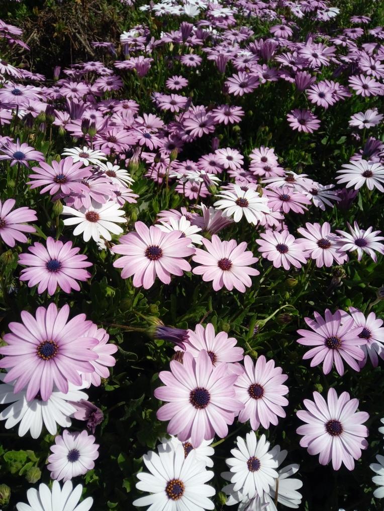 flowers-in-alicante-20190324_114755