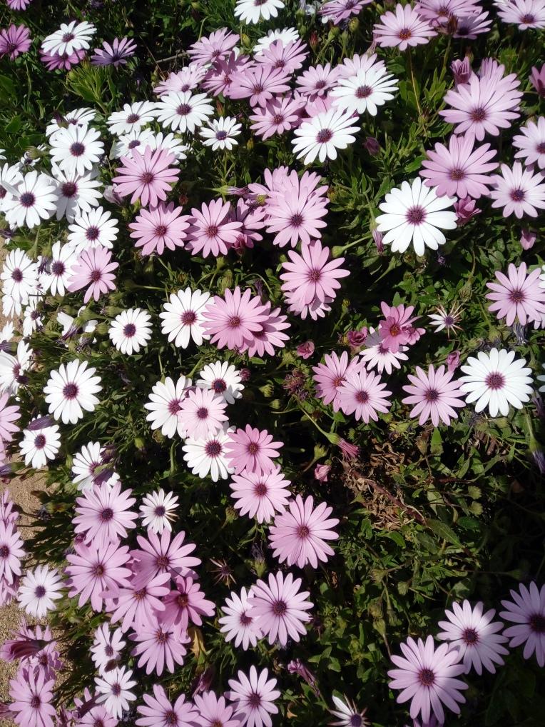 flowers-in-alicante-20190324_114840