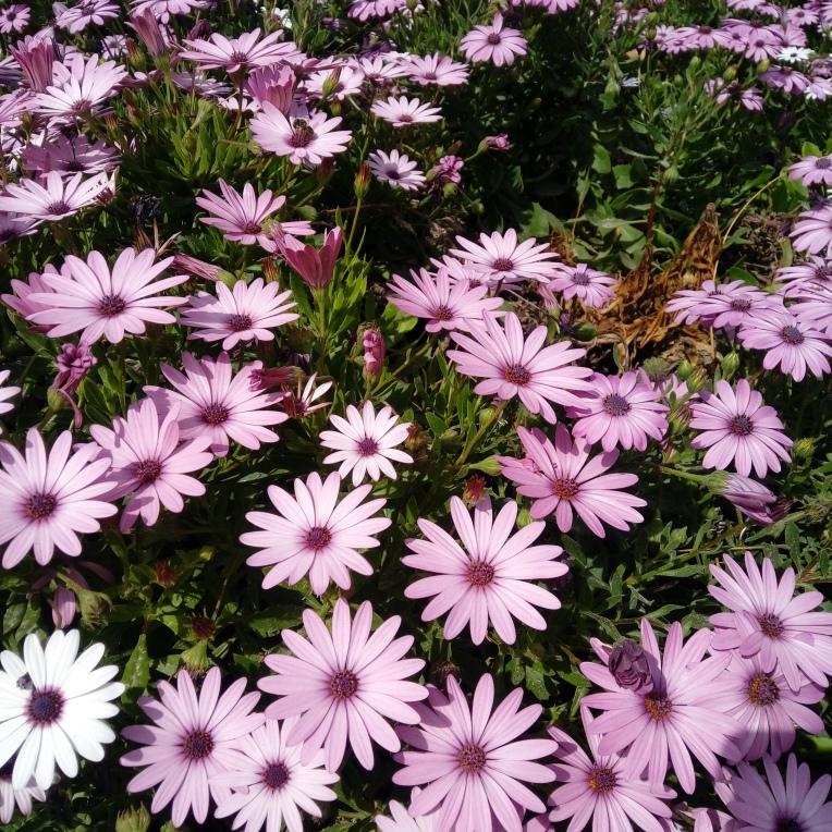 flowers-in-alicante-20190324_114850