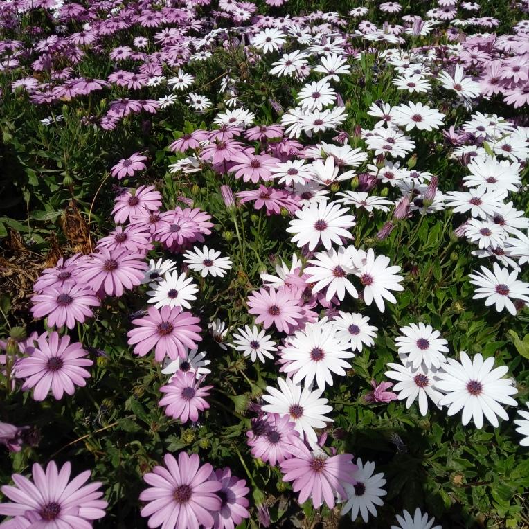 flowers-in-alicante-20190324_114859