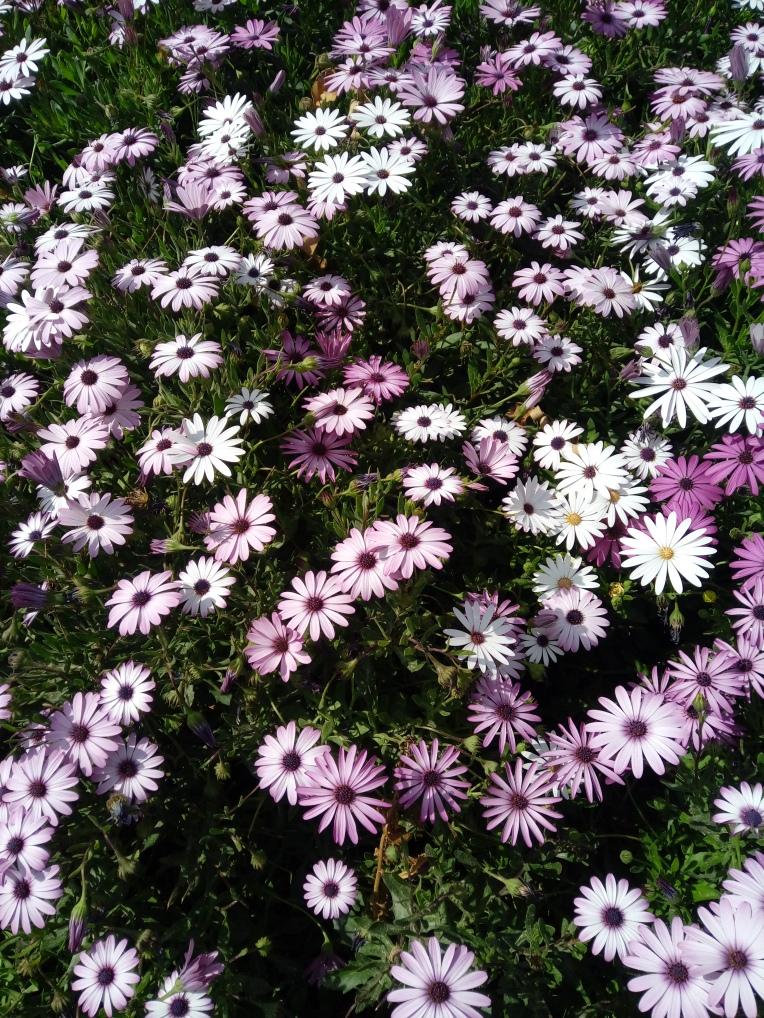 flowers-in-alicante-20190324_114933