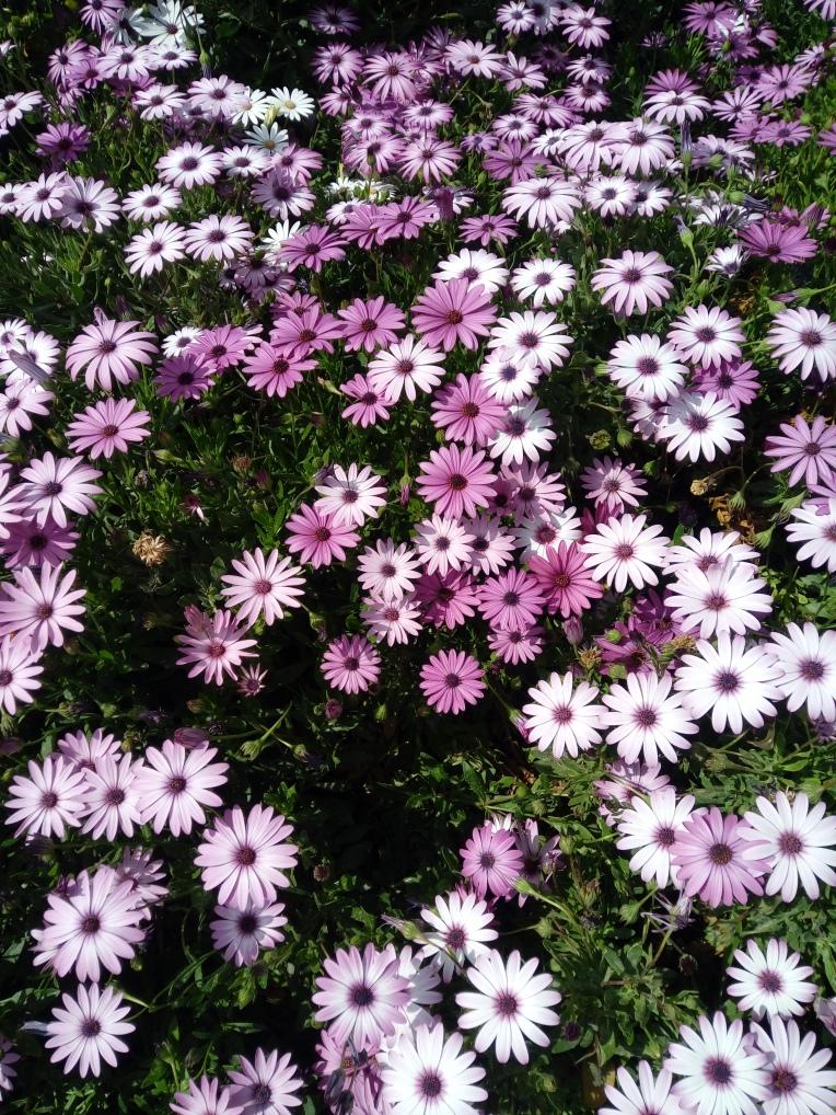 flowers-in-alicante-20190324_114942