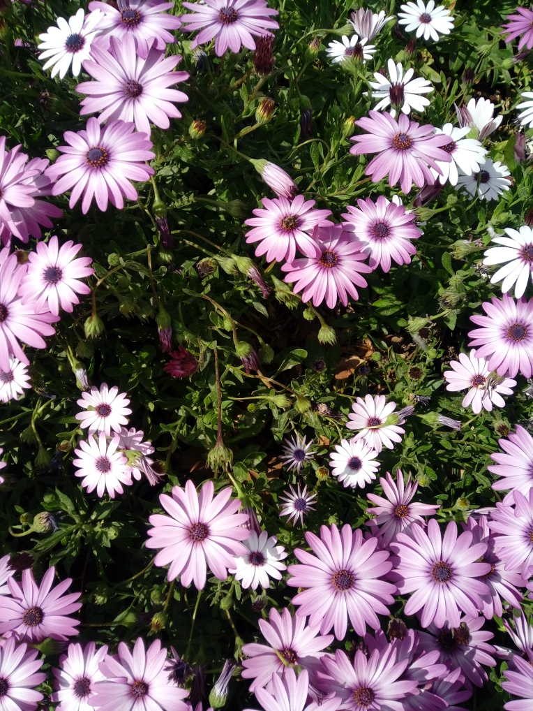 flowers-in-alicante-20190324_114957