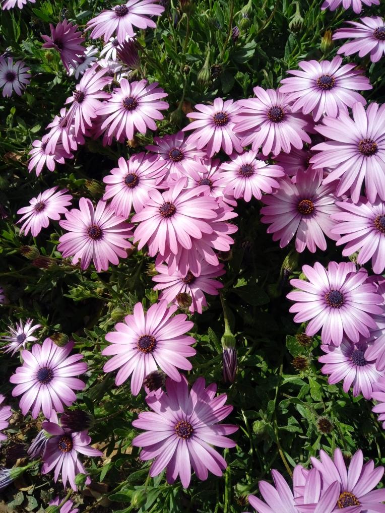 flowers-in-alicante-20190324_115008