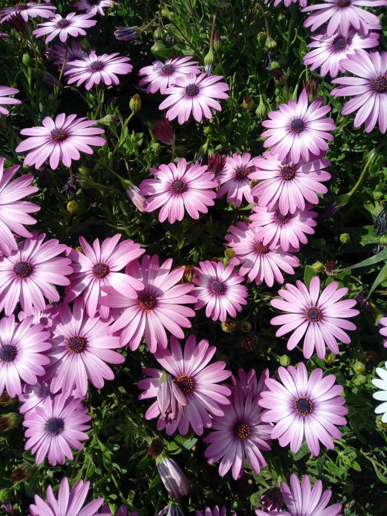 flowers-in-alicante-20190324_115013