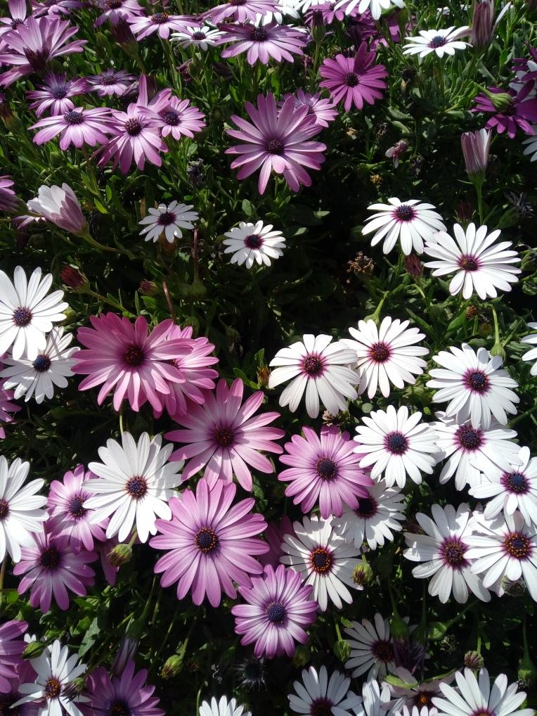 flowers-in-alicante-20190324_115034