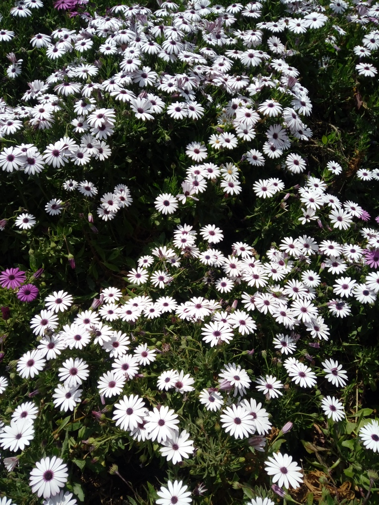 flowers-in-alicante-20190324_115048