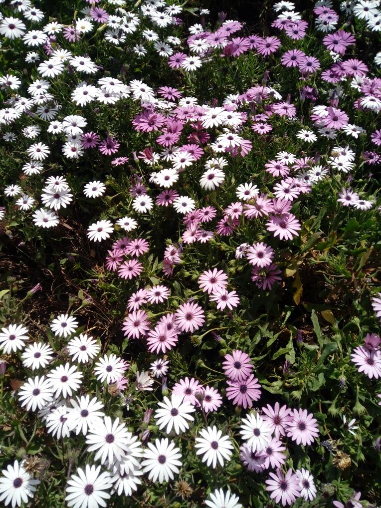 flowers-in-alicante-20190324_115059
