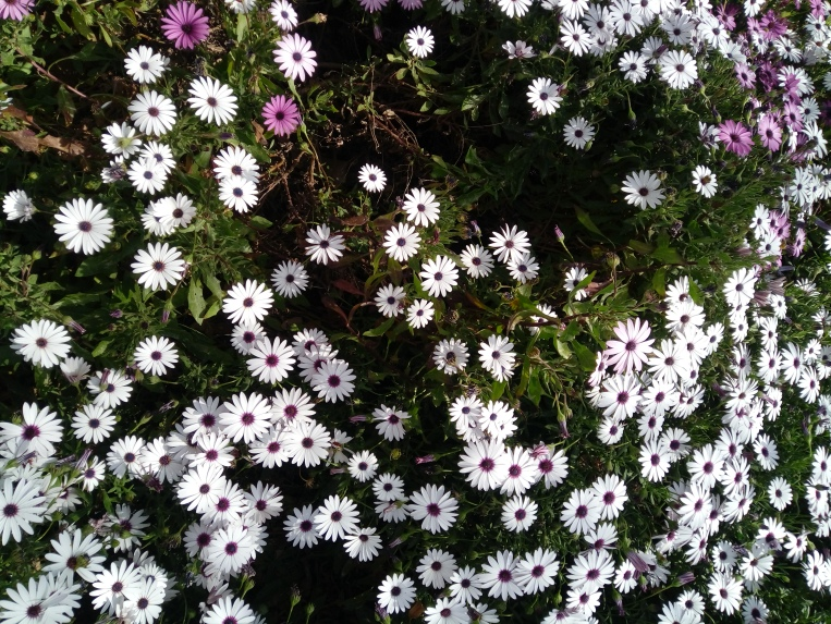 flowers-in-alicante-20190324_115112