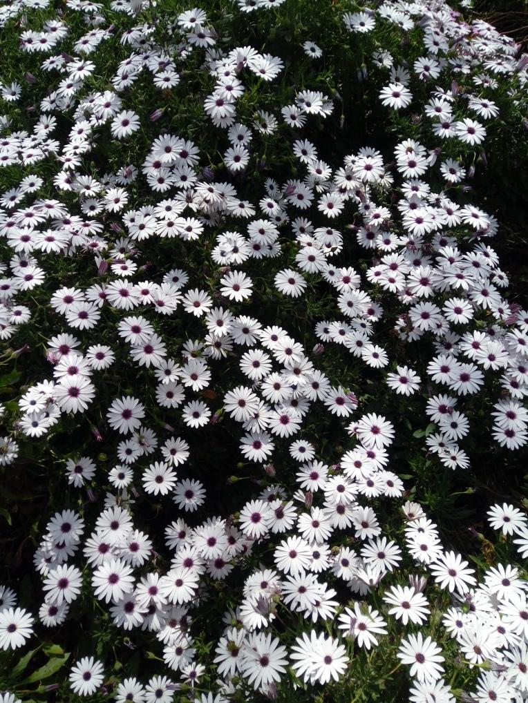 flowers-in-alicante-20190324_115117
