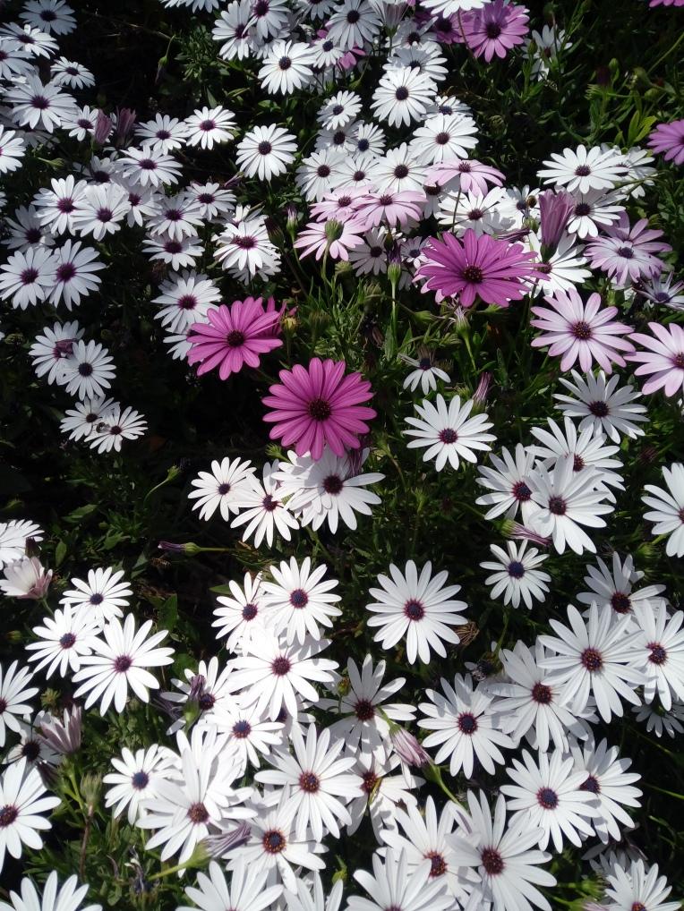 flowers-in-alicante-20190324_115127