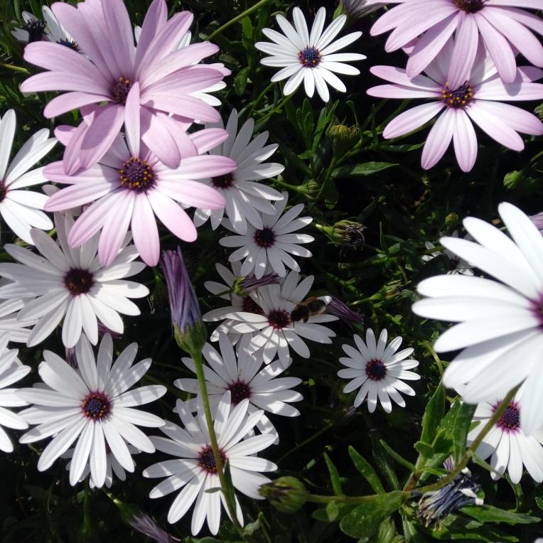 flowers-in-alicante-20190324_115137