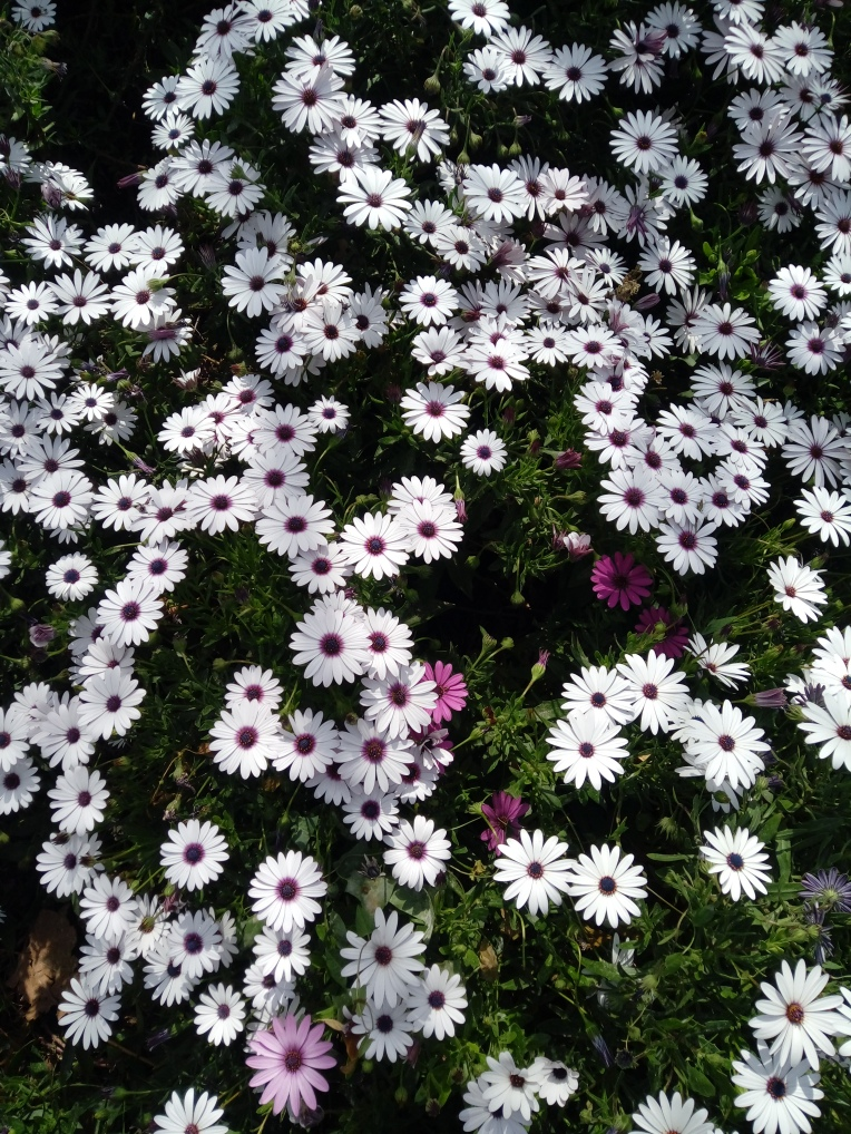 flowers-in-alicante-20190324_115202