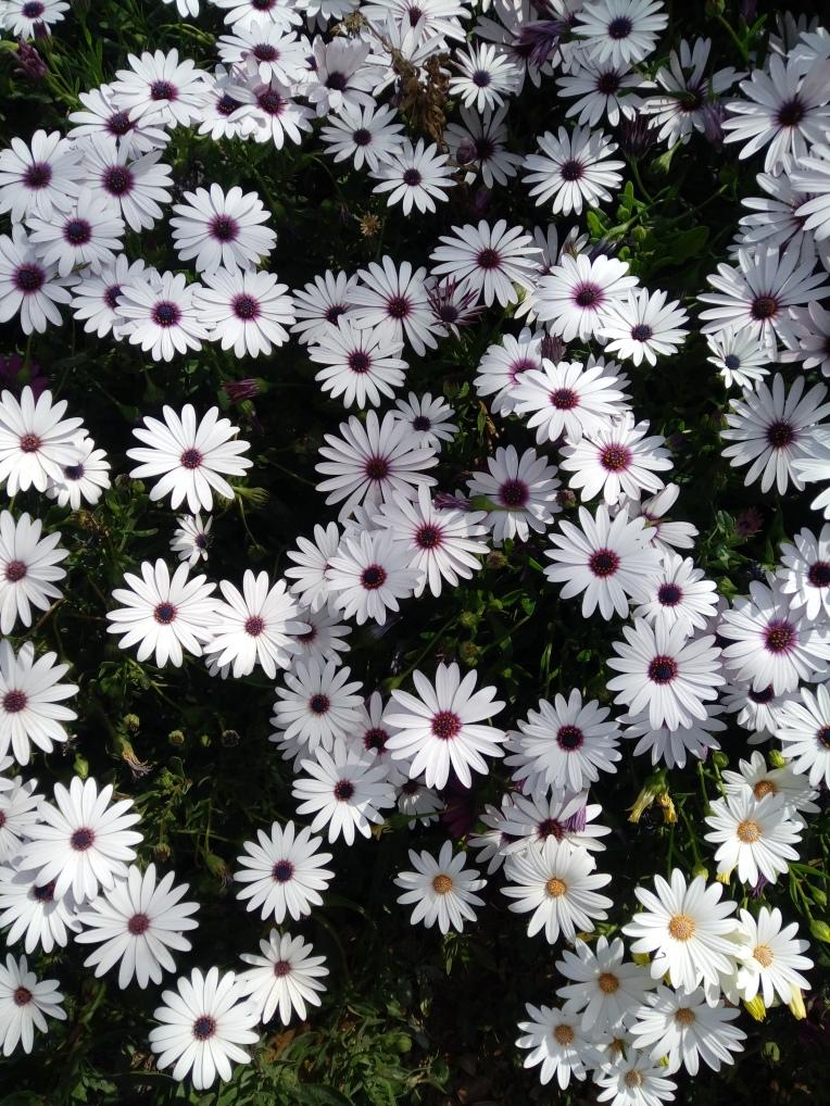 flowers-in-alicante-20190324_115212