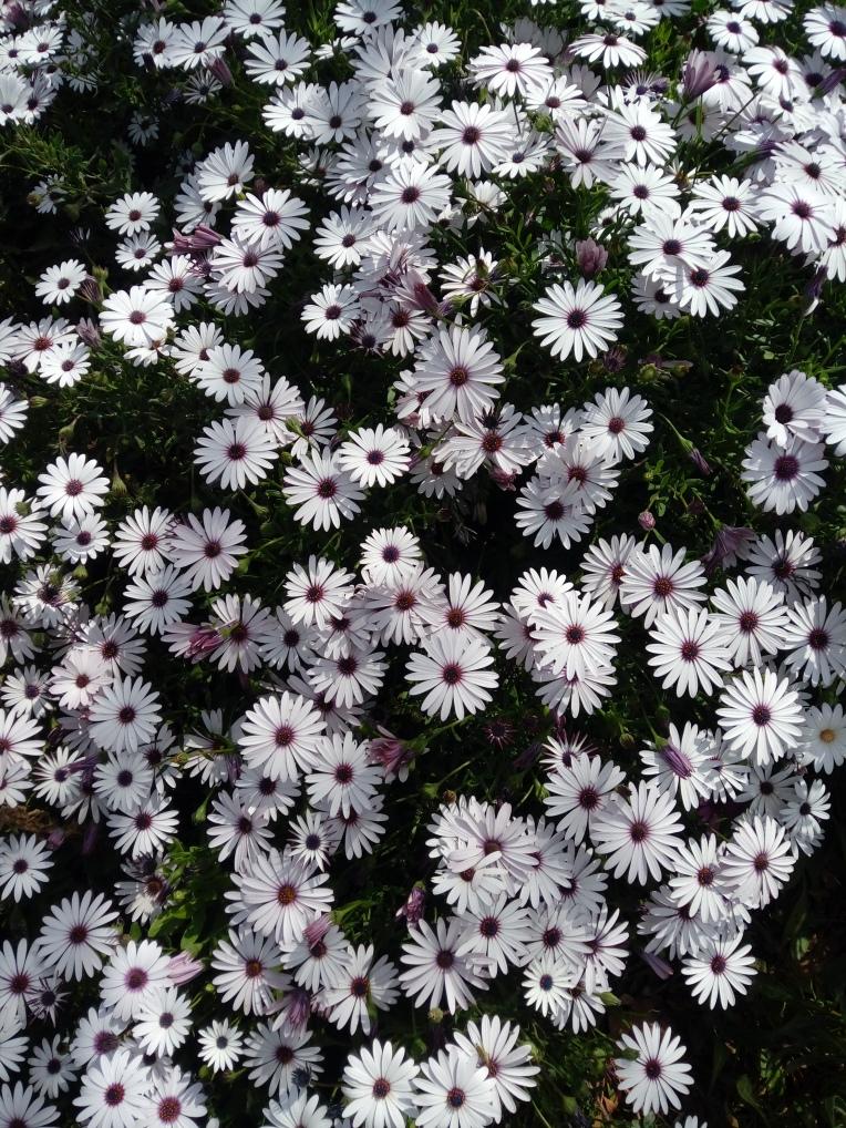flowers-in-alicante-20190324_115215