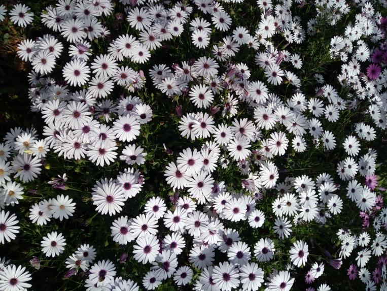 flowers-in-alicante-20190324_115224