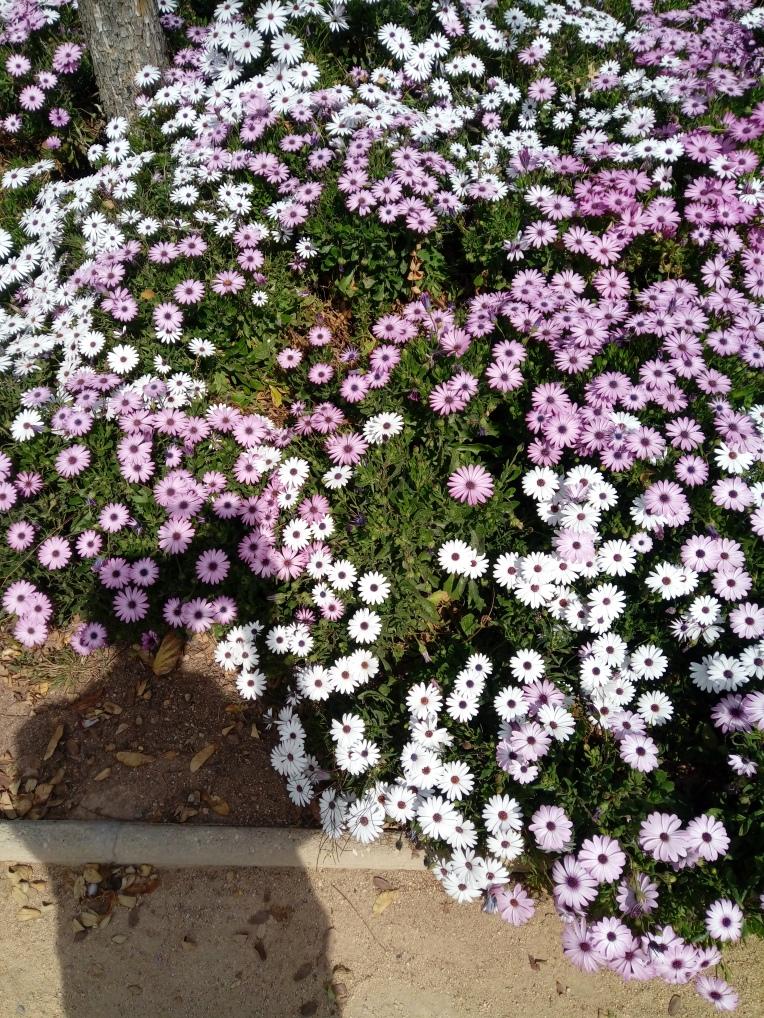flowers-in-alicante-20190324_115314