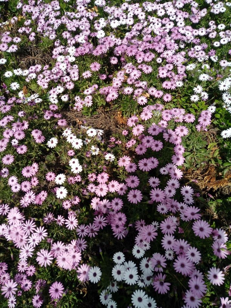 flowers-in-alicante-20190324_115348