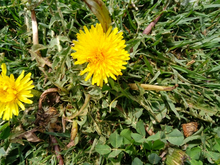 flowers-in-alicante-20190324_131456