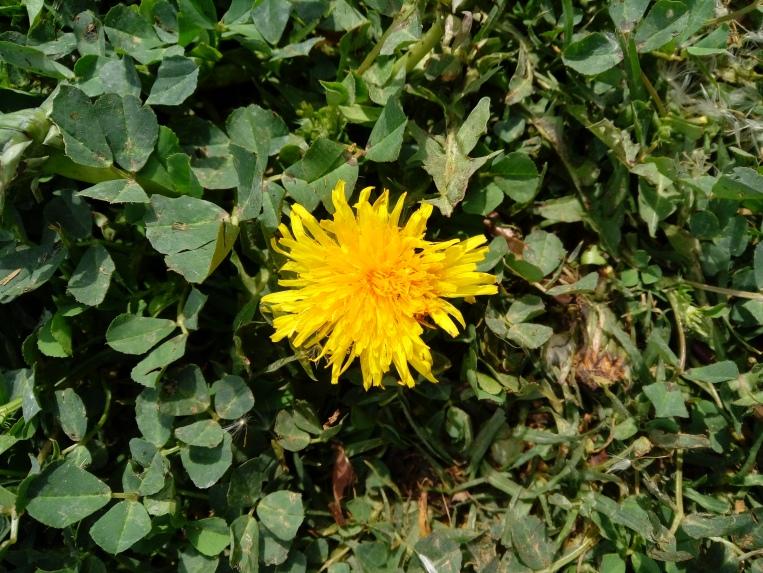 flowers-in-alicante-20190324_131507